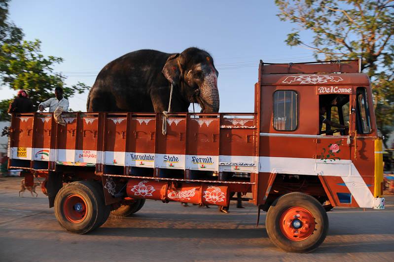 Elefant auf LKW, Laster, Verkehr, Indien, indischer Verkehr, Straßen, Südindien, Reisetipps, Rundreisen, Asien, Reiseberichte, Reiseblogger, www.wo-der-pfeffer-waechst.de