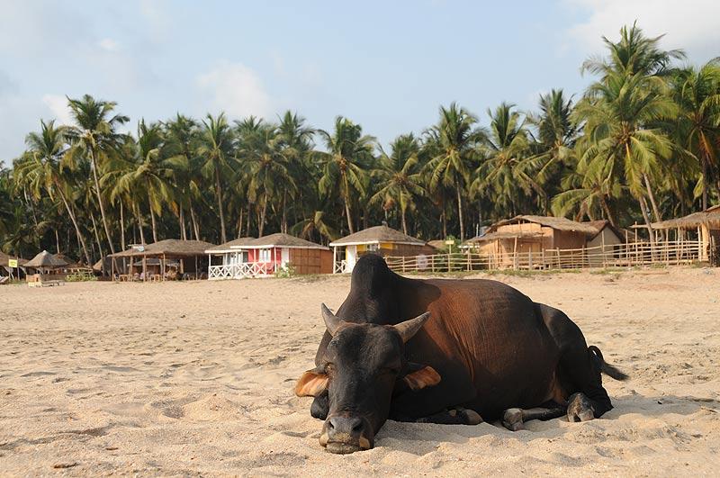 Agonda Beach, Goa Beach Guide, die schönsten Strände von Norden nach Süden, Strand, best beaches, Nordgoa, Südgoa, Indien, India, Beach-Hopping, Reisen mit Kindern, Indien mit Kindern, Südasien, Bilder, Fotos, Reiseberichte, www.wo-der-pfeffer-waechst.de