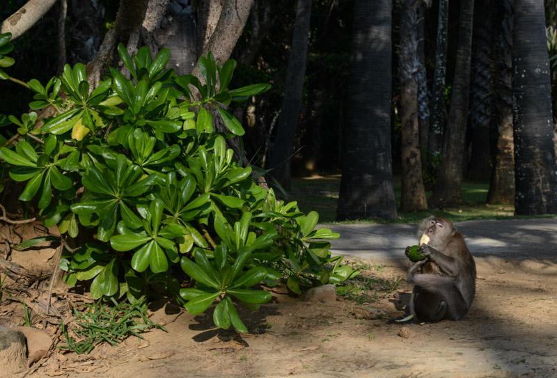 Mu Koh Lanta National Park, Affen, monkey, Beach Guide, Thailand, schöne Strände, Ausflüge, Schnorcheltouren, Reisetipps, Reisen mit Kindern, Babys, Kleinkindern, Elternzeit, Inselhüpfen, Andamanensee, Südthailand, Klong Dao Beach, Asien, Reiseberichte, Reiseblogger, www.wo-der-pfeffer-waechst.de
