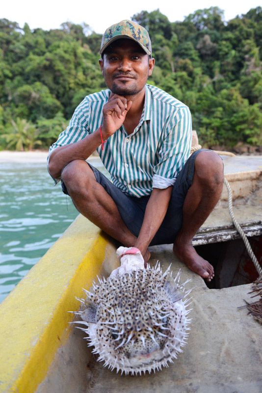 Kugelfisch, blowfish, pufferfish, Bootstour, Boat Trip, Koh Rong, Kambodscha, Cambodia, Südostasien, Bilder, Fotos, Reiseberichte, www.wo-der-pfeffer-waechst.de