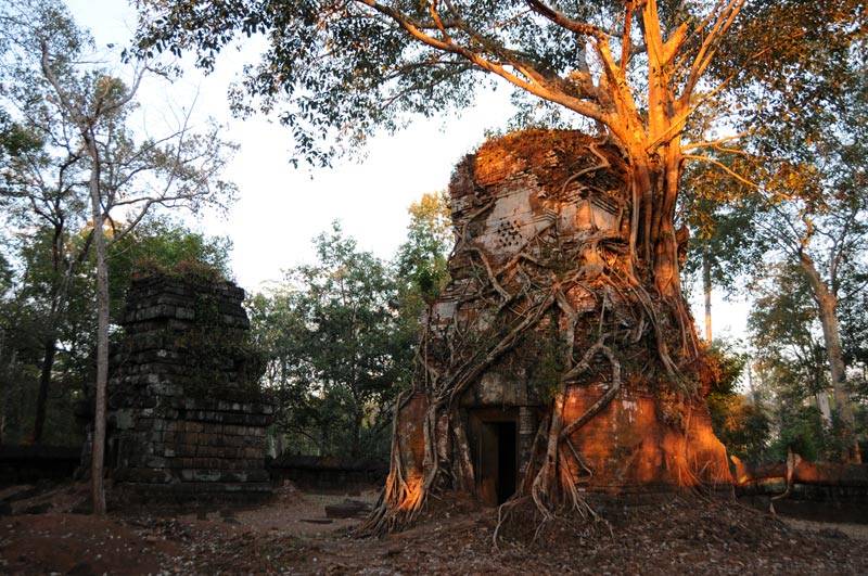 Koh Ker, Khmer-Tempel, Baumwurzeln, Sonnenuntergang, Kambodscha, Reisebericht, Cambodia, Reisetipps, Backpacking, Südostasien, Bilder, Foto: Heiko Meyer, www.wo-der-pfeffer-waechst.de