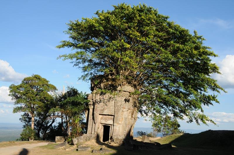Preah Vihear, Khmer-Tempelruine, Baum, Kambodscha, Reisebericht, Cambodia, Motorradtour, Reisetipps, Backpacking, Südostasien, Bilder, Foto: Heiko Meyer, www.wo-der-pfeffer-waechst.de