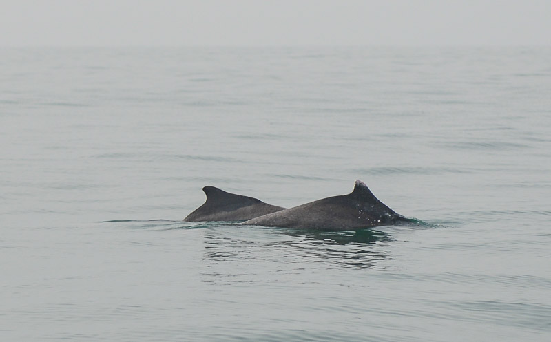 Delfintour, Palolem Beach, Goa, Strände, Strand, Südgoa, Indien, India, Südasien, Bilder, Fotos, Reiseberichte, Foto: Heiko Meyer, www.wo-der-pfeffer-waechst.de