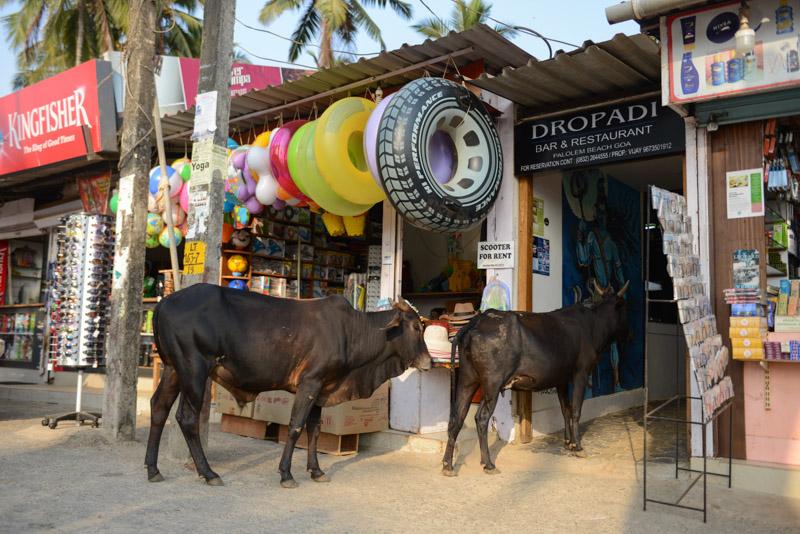 Kühe, Shop, Palolem Beach, Goa, Strände, Strand, Südgoa, Indien, India, Südasien, Bilder, Fotos, Reiseberichte, Foto: Heiko Meyer, www.wo-der-pfeffer-waechst.de