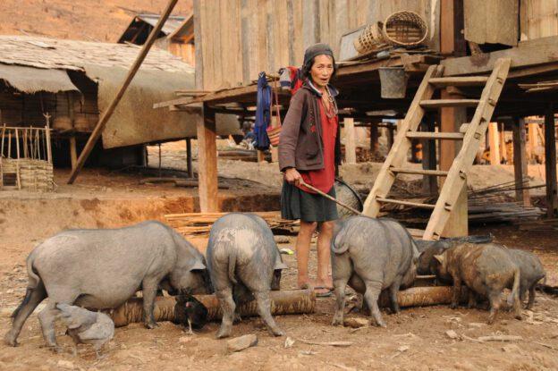Laos, Nordlaos, Vieng Phouka, Vieng Phouka, Trekkingtour, Bergvölker, Akha Trail, Stammesdorf, Erdbeben, Reisetipps, Rundreisen, Asien, Reiseberichte, Reiseblogger, www.wo-der-pfeffer-waechst.de